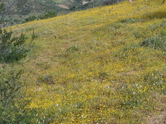 Rock Climbing Photo: Frequent rains bring slopes covered with spring fl...