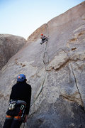 Rock Climbing Photo: Bird of Fire (Joshua Tree)