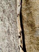 Rock Climbing Photo: Suicide Rock lizard chimney splitter!!!