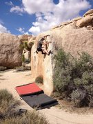 Rock Climbing Photo: Chad Parker bouldering J-Tree