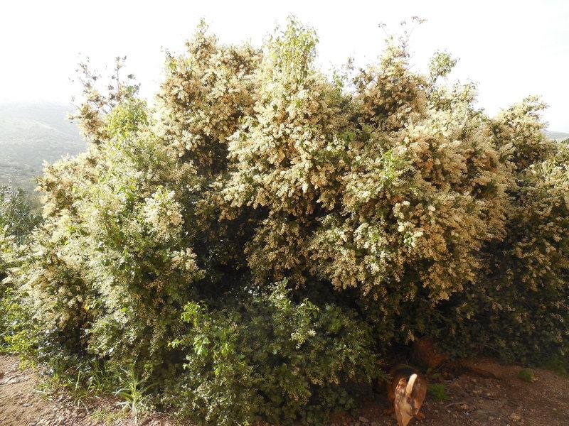 Flourishing vegetation at the base of Hyperion Slab.