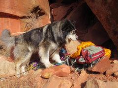 Rock Climbing Photo: Lobo Don't Care