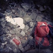 Rock Climbing Photo: As long as she's outside she's content.
