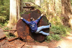 Rock Climbing Photo: Redrock in Utah. Redwood in Cali. Lost Rocks not s...