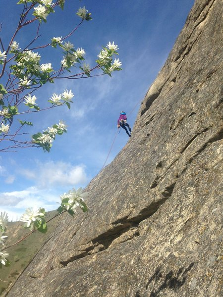 Rock Climbing Photo: Alexis rapping the first pitch of Potholes