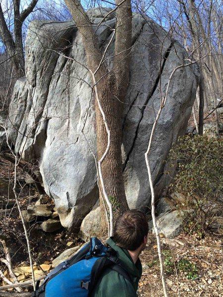 Rock Climbing Photo: Birdland Boulder