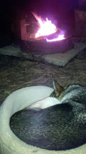 Sammy enjoying campfire at Vedauwoo