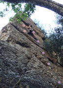 Rock Climbing Photo: Red - Goulara Purple - new bolts (all 5 are visibl...
