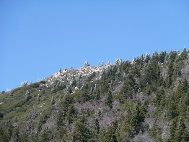 Rock Climbing Photo: Frosted trees after a Spring storm, Big Bear Lake ...