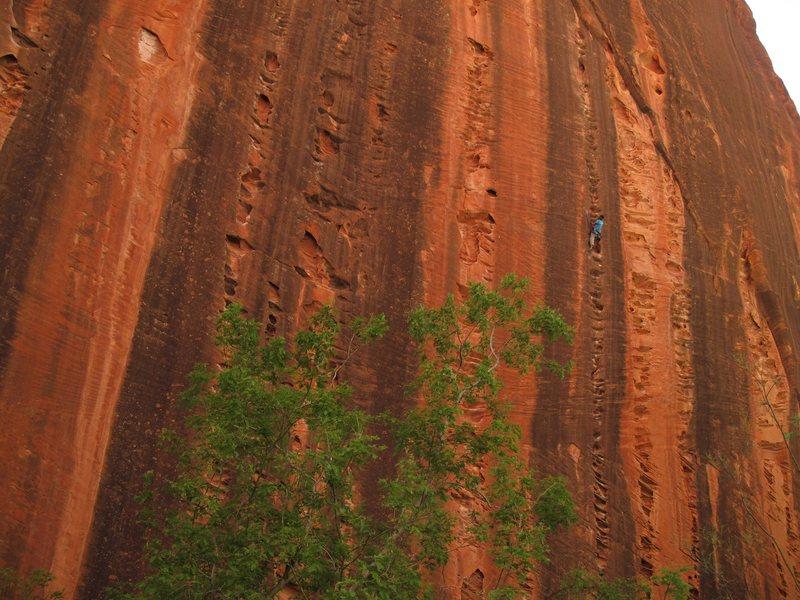 Rock Climbing Photo: Zion - Namaste