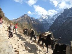 Rock Climbing Photo: yakety yak