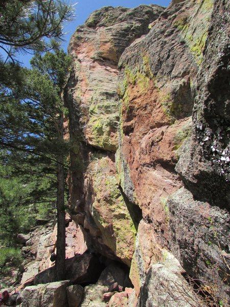 Rock Climbing Photo: Tree Frog.