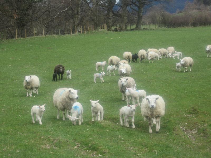 Spring has sprung. Lake District