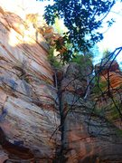 Rock Climbing Photo: The final chimney pitch and rappel tree.