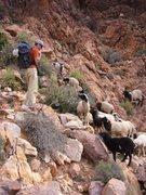 Rock Climbing Photo: Objective hazards, Tafraoute