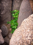 Rock Climbing Photo: The 'start' of The Hobbit... I would scramble up t...