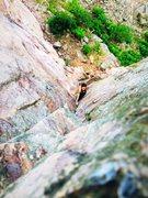 Rock Climbing Photo: Blue bells