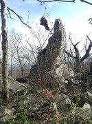 Rock Climbing Photo: Ridge Boulders Area: What I'm pretty sure is the C...