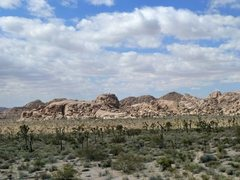 Rock Climbing Photo: The view from the base of Herman Rock, Joshua Tree...