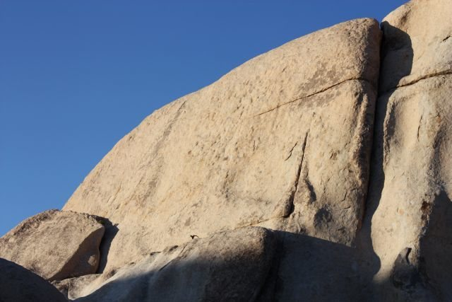 Rock Climbing Photo: The left side of Laugh Rock's (W. Face), Joshua Tr...