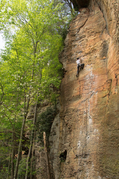 Rock Climbing Photo: To defy laws of tradition 5.10a, Red River Gorge, ...