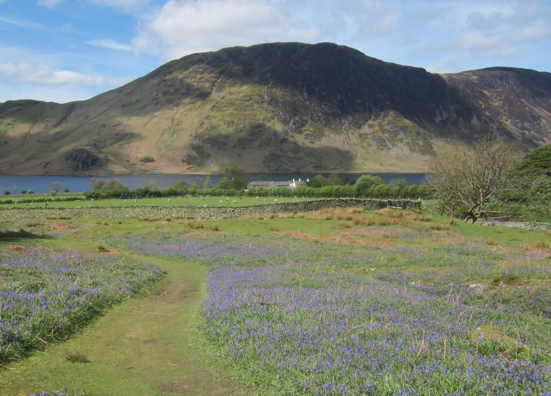 Bluebells Crummock Water May14th
