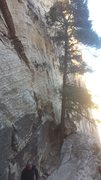 Rock Climbing Photo: That's the start tree. Love the tree, be the tree,...