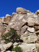 Rock Climbing Photo: Labor Dome, Joshua Tree NP