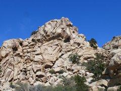 Rock Climbing Photo: The Aviary, Joshua Tree NP