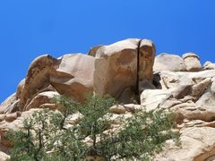 Rock Climbing Photo: Another view of The Aviary, Joshua Tree NP