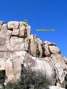 Rock Climbing Photo: Adult Books (5.10c), Joshua Tree NP