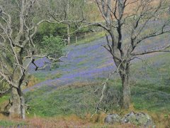 Rock Climbing Photo: More Bluebells in the Buttermere Valley