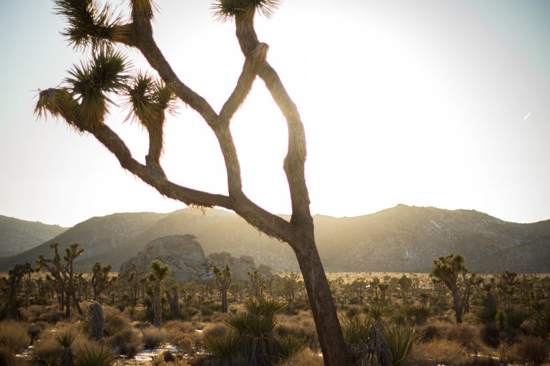 J-tree Sunset<br> <br> Photo: Tyler Casey