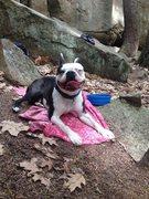 Rock Climbing Photo: Nixon enjoying the afternoon at Pawtuckaway