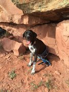 Rock Climbing Photo: Doggie belay