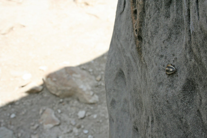 Rock Climbing Photo: Ants hauling a shell up Super Sloper