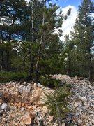 Rock Climbing Photo: Random Quarts deposit... Pretty sweet. Devils Head...