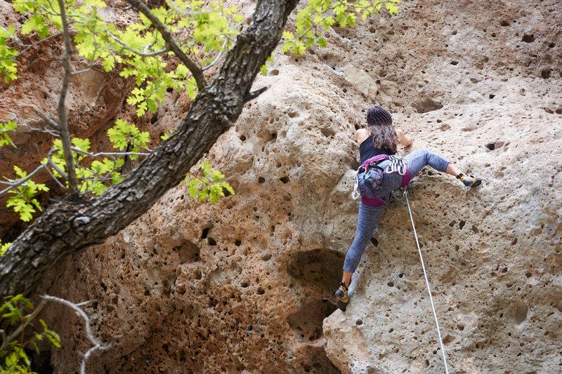 Rock Climbing Photo: Leading Prima Donna, 10b.