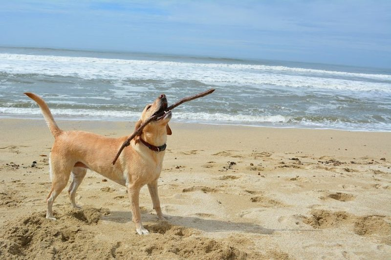 Rock Climbing Photo: my dog, Kona