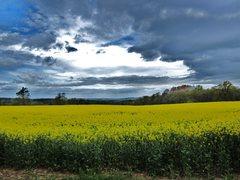 Rock Climbing Photo: Fields of Yellow