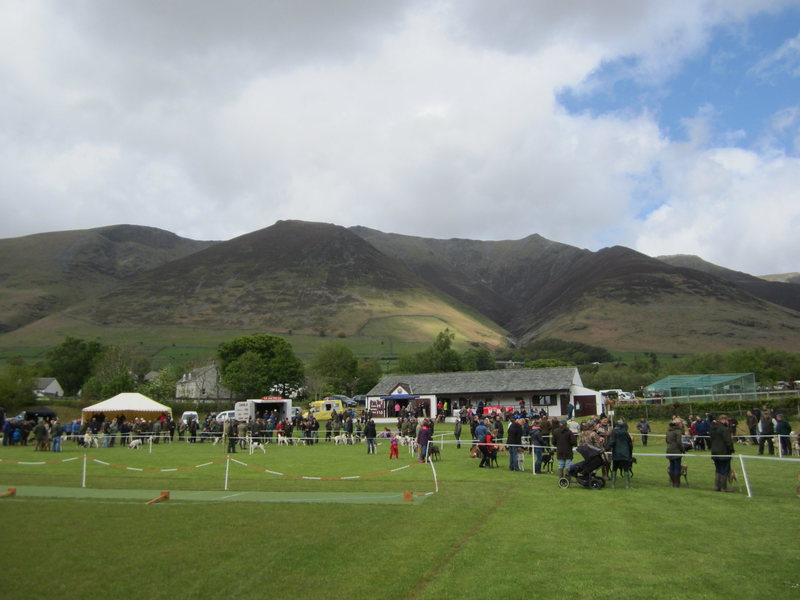 Hunting Dog Show . Threlkeld .. English Lake District