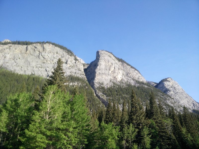 Mother's day buttress