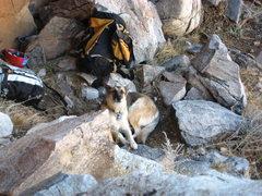 Rock Climbing Photo: the GM
