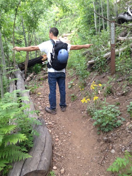 Rock Climbing Photo: This is where you turn left off the aspen trail on...