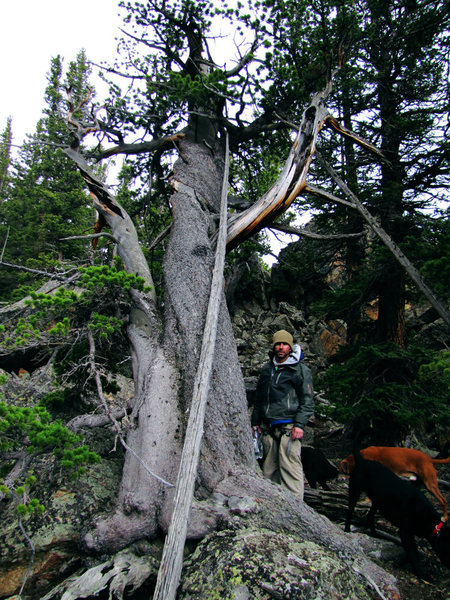 Doug and a cool tree near the base.
