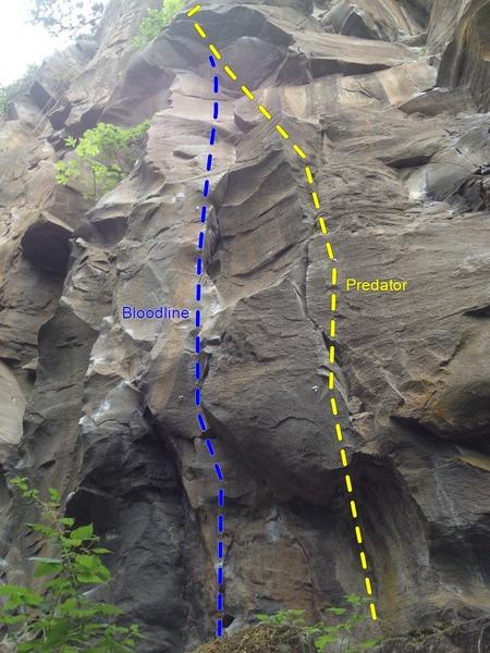 Rock Climbing Photo: Predator and Bloodline