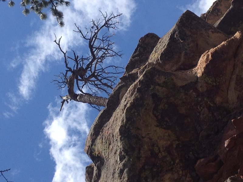 Rock Climbing Photo: Rap tree?