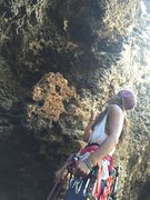 Rock Climbing Photo: Cindy sussing the beta at a ~5.9 at Makauwahi Cave