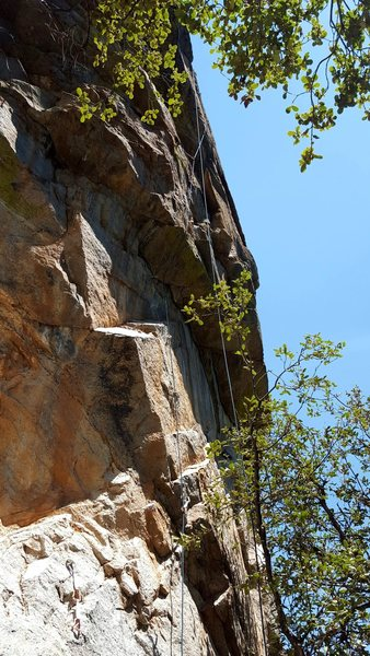 <em>Tree Top Flyer</em>.  The first 2/3 of the route, including the business, is shown.