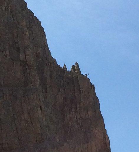 Climber on Sharkstooth 06/20/15